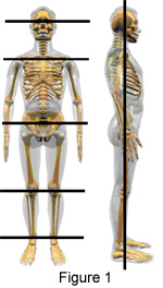 What Is Correct Posture